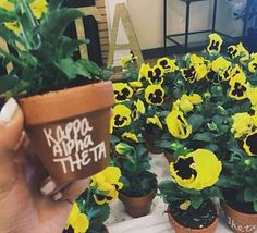 Plant your sorority flower!
