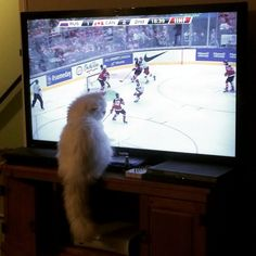 When the game is on but you want attention: | 13 Problems Only Pets Who Live In Canada Will Understand