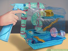 http://www.wikihow.com/Care-for-a-Hamster