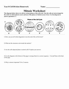 Range Rover Coloring Pages Best Of Pick Up Cool Cars Coloring Pages Svtoa Cell Cycle Color Worksheets Worksheets