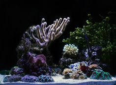 trueisb2 - 2012 Featured Nano Reefs - Featured Aquariums - Monthly Featured Nano Reef Aquarium Profiles - Nano-Reef.com Forums
