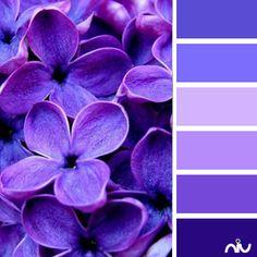 Love The Peony Purple Color Scheme