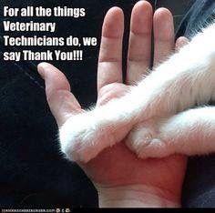 20 Vet Tech Appreciation Week Ideas Vet Tech Vets Veterinary Technician
