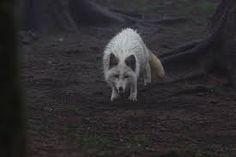 Resultado de imagen para zao fox village white fox