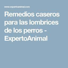 remedios caseros para perros con lombrices