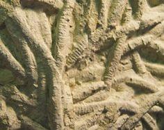Worm Fossil. TN
