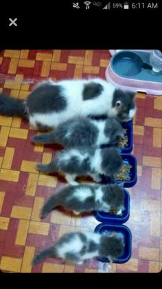 Fluffy crunch and her babies