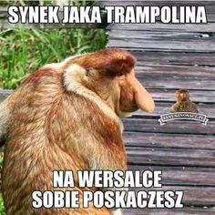 Best Memes, Nasa, Funny, Meme Meme, Animals, Black, Humor, Animales, Animaux