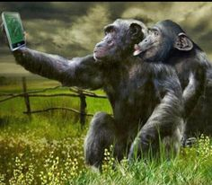 If there are two captured on a mobile, is that still classed as a selfie ? Animals And Pets, Baby Animals, Funny Animals, Cute Animals, Primates, Mundo Animal, Tier Fotos, Pet Birds, Animals Beautiful