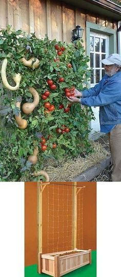 Vertical gardening - it maximizes your harvest, makes the most of limited space, doesn't require lots of bending, and keeps your veggies away from pests and rot. This easy-to-assemble kit lets you grow vertically vining plants either against a wall, or as a free-standing unit using your own posts. Takes up just four square feet of growing space but produces more vegetation than a 24 square foot plot! Perfect for tomatoes, pole beans, cucumbers, or any vining plants. Potager Vertical, Vertical Vegetable Gardens, Vegetable Gardening, Vertical Planting, Diy Vertical Garden, Vegetable Boxes, Gourd Vegetable, Vertical Garden Wall, Backyard Vegetable Gardens