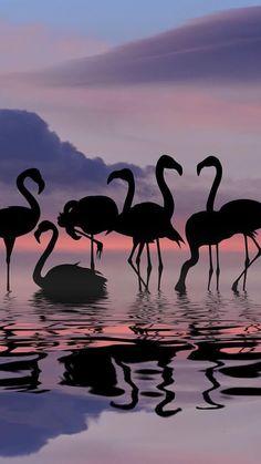 Ideas for wallpaper pink flamingo animals Flamingo Wallpaper, Flamingo Art, Nature Wallpaper, Pink Flamingos, Wallpaper Backgrounds, Flamingo Photo, Iphone Backgrounds, Phone Wallpapers, Flamingo Pictures