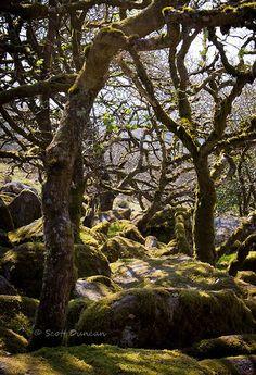 Wistman's Wood - Dartmoor