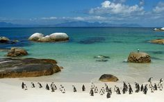 Penguins on Boulder Beach, South Africa- The coolest place with penguins i have ever seen