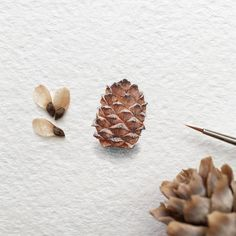 "445 Likes, 3 Comments - Irene Malakhova (@irene_mia_) on Instagram: ""Day 91/120 (23/30 #tiny_yummydays series). Cedar cone. Size 12 x 17 mm. - #cedar #cone #siberia…"""