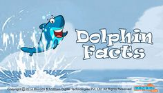 #DolphinFacts! Know all about these #endangeredmammals, Where do #dolphins live?, how do thsese marine animals communicater? and the types of dolphins? For more interacting #Generalknowledge For #Kids, visit: http://mocomi.com/learn/general-knowledge/