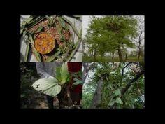Medicinal Rice P5L Formulations for Adenostemma Excess: Pankaj Oudhia's ...