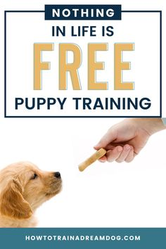 """Is your dog's attitude a little out of line? You will need to follow a policy called """"Nothing In Life Is Free."""" The more you make your dog work for the things they want, the better behaved they'll be. Here's how you can teach your dogs manners and respect from day one. Puppy Obedience Training, Puppy Training Tips, Training Your Dog, Free Puppies, Free Dogs, Cute Dog Photos, Dog Boarding, Dog Behavior, New Puppy"""