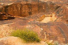 Pictures of Petroglyphs  Arizona