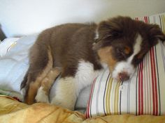 my sleepy baby