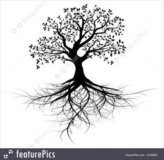 Plants: Whole black tree with roots isolated white background vector