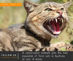 With no natural predators, hunters play a vital in role in helping to reduce the number of feral cats.