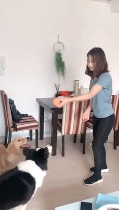 Who is smarter ? Cute Funny Dogs, Funny Cats And Dogs, Cute Cats And Kittens, Funny Pets, Cute Puppy Videos, Funny Dog Videos, Cute Animal Videos, Animals And Pets, Funny Animals