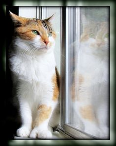 ♥ =^..^= Cats in the window ♥