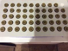 50個入ってるはずの苗床が49個しかないというルーマニアクオリティもティッシュを詰めてぼやかす