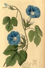 vintage botanical prints - Google Search