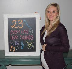 23 week pregnancy update.