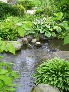 Hostas planted around pond...always lovely.