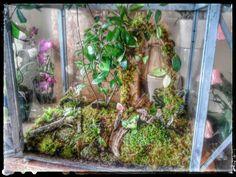 Rustic woodland moss fairy garden terrarium