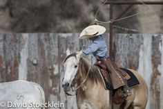 Little Cowboy, Cowboy And Cowgirl, Cattle Drive, Western Landscape, Ranch Life, Barrel Racing, Equine Photography, Saddles, Cowgirls