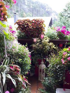 Noch komm ich durch wenn ich auf den Balkon raus geh'. Aber mit Vorsicht, alles bissl eng... Aber das hat mich ja noch nie gestört :-) September 2017 September, Plants, Balcony, Plant, Planets