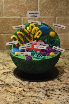 Reed's 7th grade Advanced Science Animal Cell project 3D: