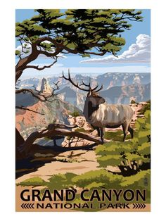 Grand Canyon National Park - Elk & Point Imperial Art Print by Lantern Press at Art.com