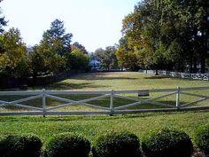 Graceland - Pasture