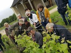 Journée Découverte au Château de la Bonnelière - Marc Plouzeau, le vigneron, explique la tâche de l'ébourgeonnage en vigne #GourmetOdyssey
