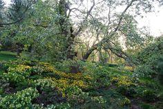 richly textured shade garden - hellebores