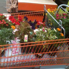 Planting flowers last summer