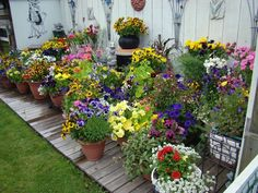 Gardening Ideas Designing White Flower Garden , Gardening has been a favorite pastime and art form for ages. There's additionally a sound gardening reason. Gardening on the rear porch or within a li. Container Flowers, Flower Planters, Container Plants, Flower Pots, Flower Ideas, Potted Flowers, Diy Flower, Flowers Garden, Cut Flowers