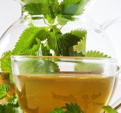 Kopřiva dvoudomá, hnojivo pro naše tělo Top 5, Korn, Celery, Detox, Herbs, Vegetables, Smoothie, Herb, Vegetable Recipes