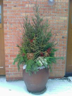 Spruce Tips are planted and harvested from the bogs of northern Minnesota. Make the spruce tip arrangement in soil in a drop in pot by starting from the middle using a tall tip with successive smaller ones around it. Fill in with other evergreens like balsam or long needle pine. The choice of accessories is unlimited; like pine cones or red ruskus. These will look pretty from November through March. See more at Del's Garden Center Facebook page.
