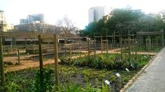 The Company's Garden Food Garden Herb Garden, Vegetable Garden, Legacy Projects, Medicinal Herbs, Natural Resources, Fruit Trees, Cape Town, National Parks, City