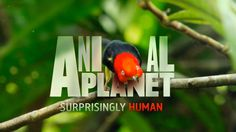 Rebrand - Animal Planet - Discovery by The Studio London , via Behance
