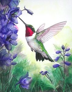 Kristina Knowski - Ruby-Throated Hummingbird with Black Knight Delphinium Hummingbird Drawing, Hummingbird Pictures, Watercolor Hummingbird, Hummingbird Flowers, Watercolor Bird, Watercolor Paintings, Bird Painting Acrylic, Spring Painting, Painting & Drawing