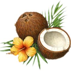Coconuts and the Annihilation of Mind