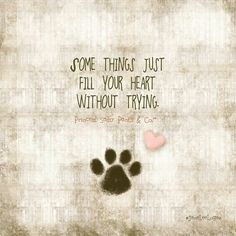 paw print ♡ heart ♡ quote