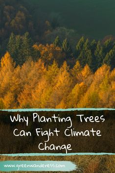 Why Planting Trees Can Fight Climate Change - Green Wanderess Rainforest Action Network, Alliance Logo, Growing Strong, Single Tree, Interesting Information, Photosynthesis, Living At Home, Best Places To Travel, Travel Ideas