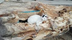 Woodworking with cats. Our furry little friend helps us to find the optimal shape for this seating furniture. Tree Trunk Table, Natural Soul, Tree Trunks, Made Of Wood, Rough Cut, Wood Species, Wood Projects, Woodworking, Shape